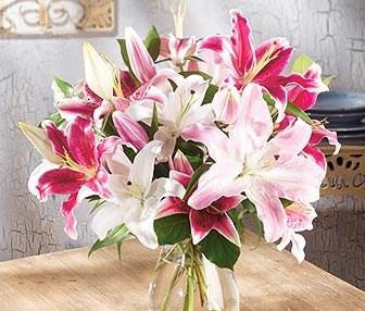 oriental lilies mien
