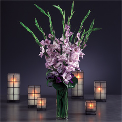 Graceful-Gladiolus)-%20ETF-2506.jpg